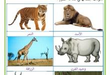 Photo of الحيوانات البرية و منافعها ، الحيوانات المتوحشة