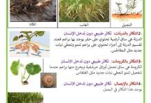 Photo of التكاثر الخضري الطبيعي والاصطناعي ( التكاثر بدون بذور)