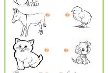 Photo of تمارين لتلاميذ التحضيري – النمو عند الحيوانات
