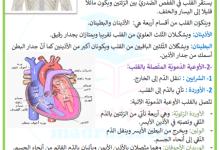 Photo of القلب و الدورة الدموية الكبرى و الصّغرى – السنة 6