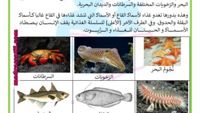 Photo of السلسلة الغذائية البحرية