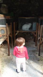 este conejo no es Alfie