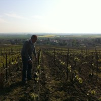 Day 1 – Coulon in the vineyard copy