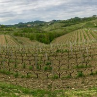 GRAVNER—Vineyards—pano