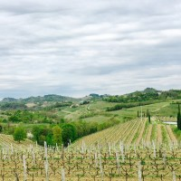 GRAVNER—Vineyards
