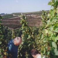 Levet, Neal in vineyard