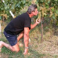 Piero Lugano kissing grapes