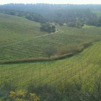 Vineyards at Du Cropio