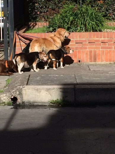 Here are some dogs patiently waiting for the next dog in their play group.