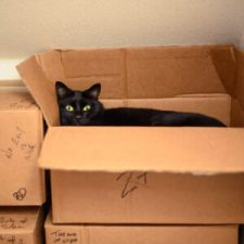 Another devoted member of the Madville Team is Toof. Photo shows a black cat in a box.