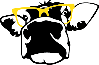 Madville's cow mascot, Beula Fay. She's a black and white Guernsey cow wearing a of giant yellow sunglasses.
