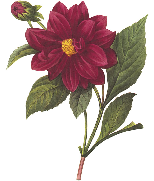 Have this lovely red flower in exchange for a donation to Madville Publishing