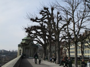 More of those weird, knobby trees that are all over Switzerland.