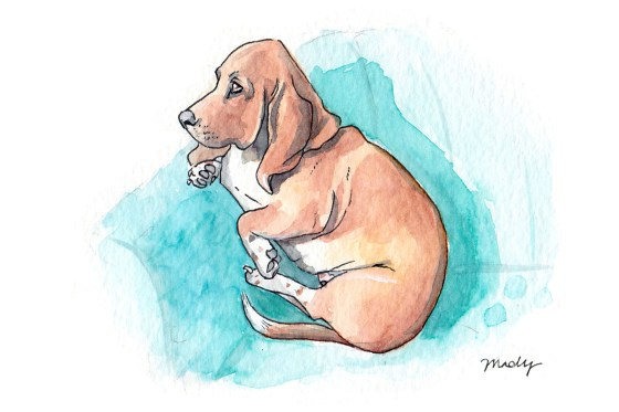 Basset Hound, watercolor, 2019