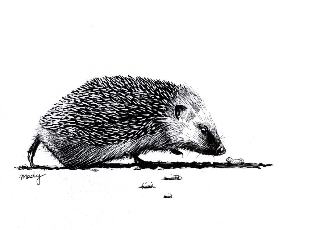 Hedgehog, Ink on scratchboard, 2019