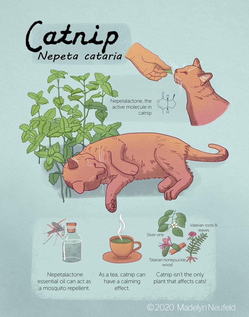 Catnip Poster, digital, 2020