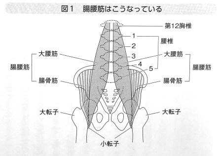 腸腰筋はこうなっている 第1章P 21