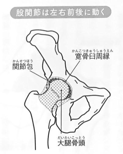 図4 股関節は左右前後に動く すべては股関節から 2章