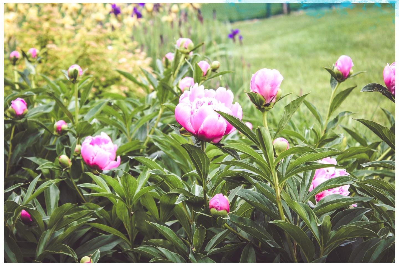 Mae Polzine Flower