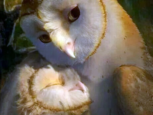 Mãe coruja: zelosa, protetora e cuidadosa