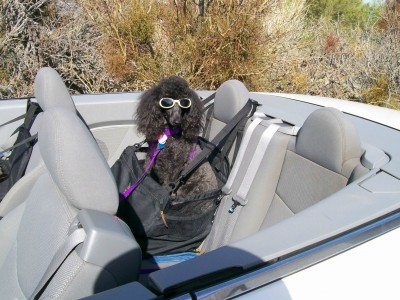 Ive Been Using Car Seats Or Restraints For My Girls Years Even Big Dog ZZ Who Is No Longer With Us Wore A Harness And Was Seat Belted Into The