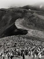 Chinstrap Penguins, Bailey Head, Deception Island, 2005 /genesis series