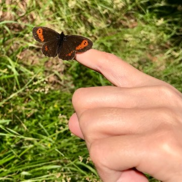 Photograph of a butterfly perched on a finger.