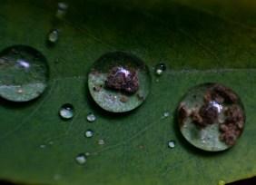 Macro Drops