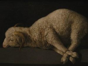 mouton piégé