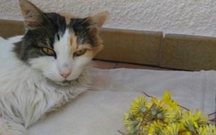TINA deux jours avant sa mort au milieu des fleurs de pissenlits portés par les petits enfants