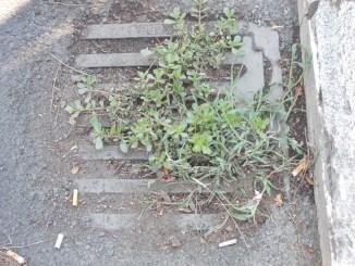 Tortona, al via la pulizia dei tombini di raccolta acqua CorriereAl