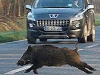 Confagricoltura chiede misure urgenti per il contenimento della fauna selvatica CorriereAl