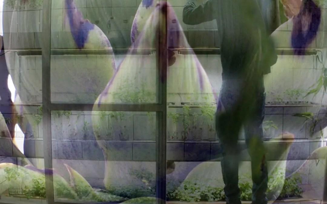 KOLLAPS – menneske i en uforutsigbar verden 12. mai – 25. juni