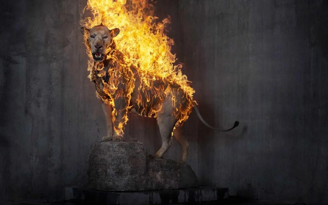 Gjennom ilden