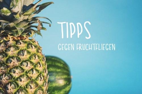 Tipps gegen Fruchtfliegen | Magazin Freshbox