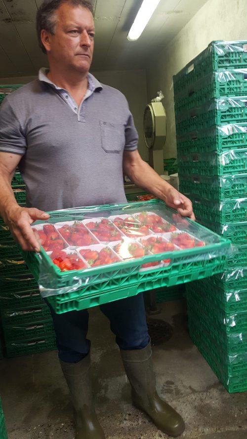 Die Erdbeeren werden in IFCO'S abgepackt und machen sich so auf dem Weg zu Freshbox