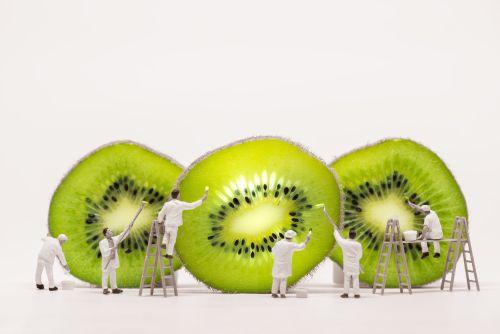 Miniature Kiwi