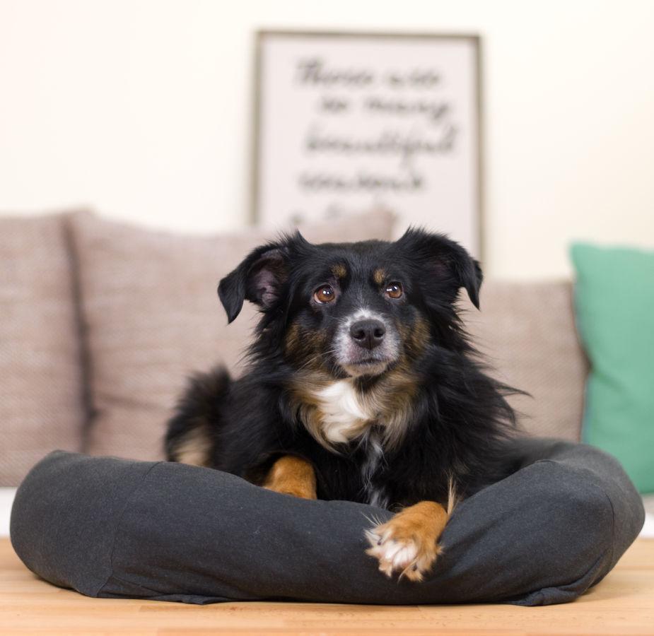 Makerist-Naehen-fuer-Hunde-17-tolle-Accessoires-fuer-Vierbeiner-Hundebett