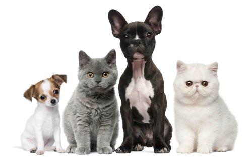 Psi a kočky