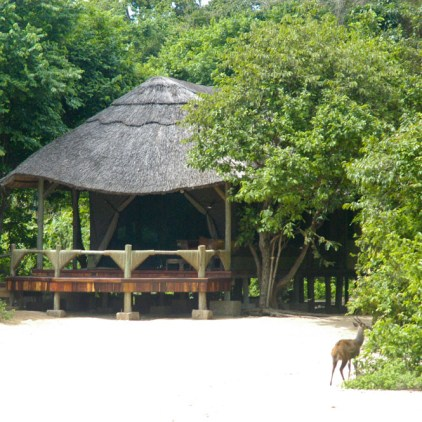 Enjoy your stay tucked away away in the surrounding forest © Mbali Mbali