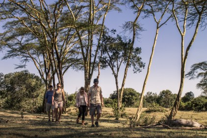 Bush walks on safari © Ol Pejeta Safari Cottages