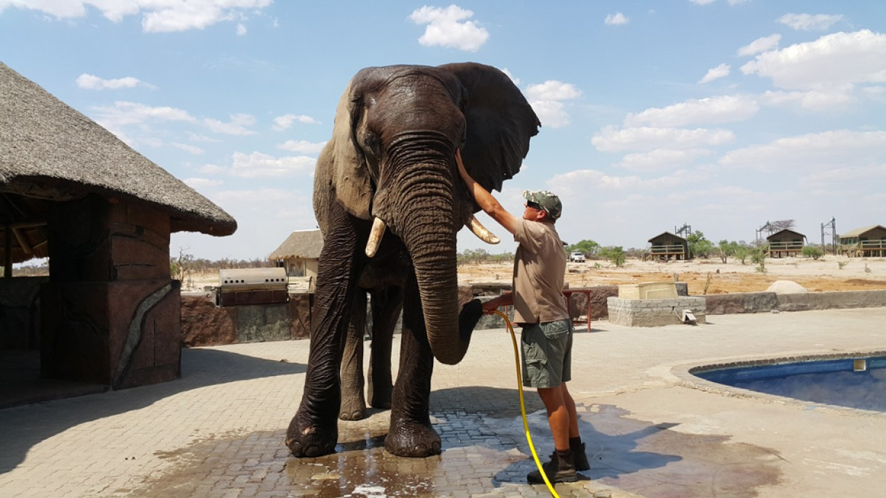 Benny the elephant and Mike Toth. Water for Elephants Trust, Botswana