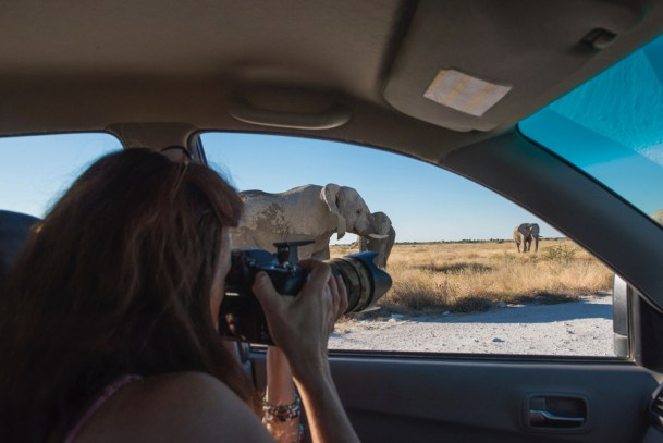 Photographing-elephants-at-Okerfontein-©-Anja-Denker