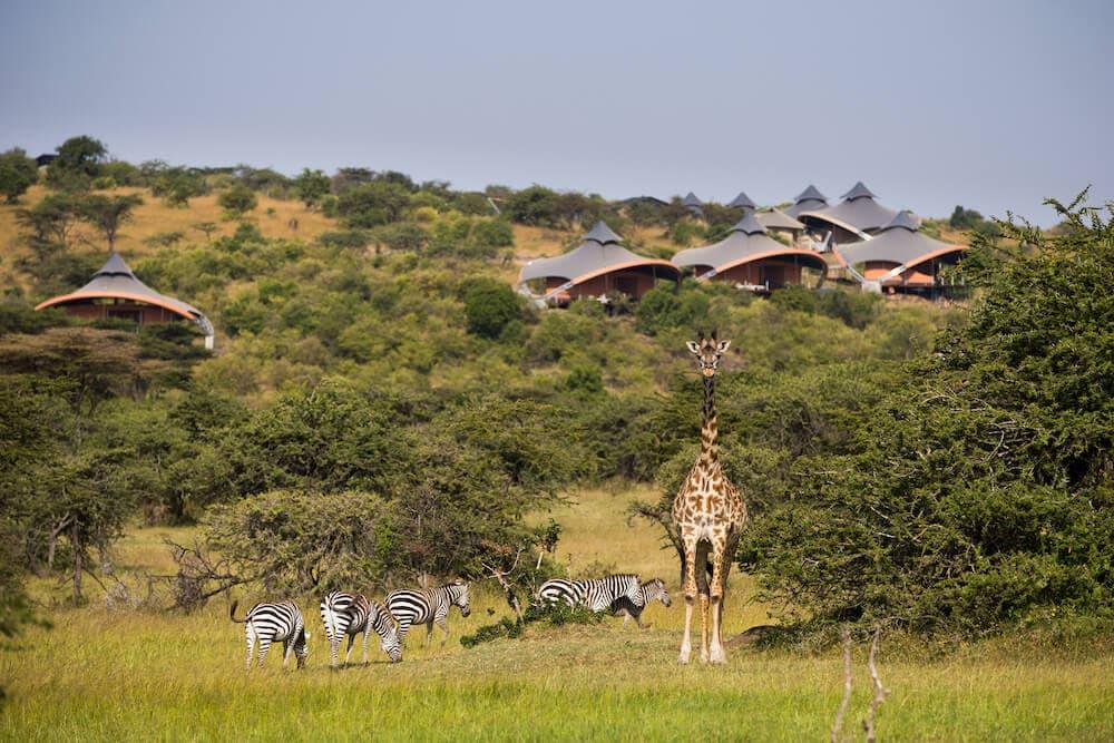 luxury safari spa, lion king safari holiday