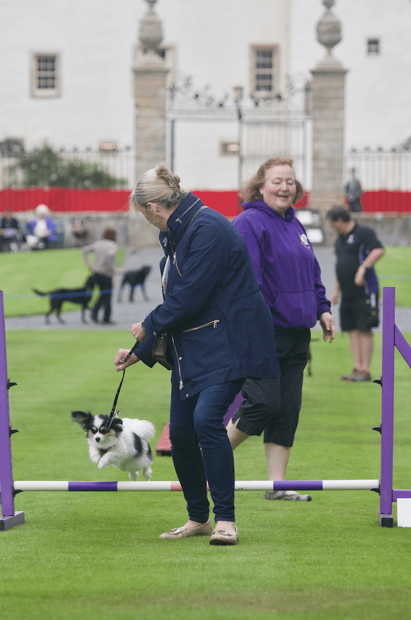 Rio at Dogs' Day Out Traquair House