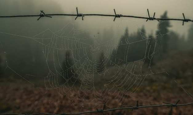 The spiderweb is the closest thing to real magic.