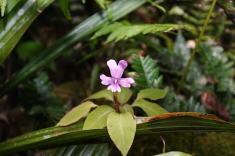 La flora 2