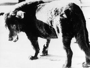 Stray Dog Misawa Aomori 1971