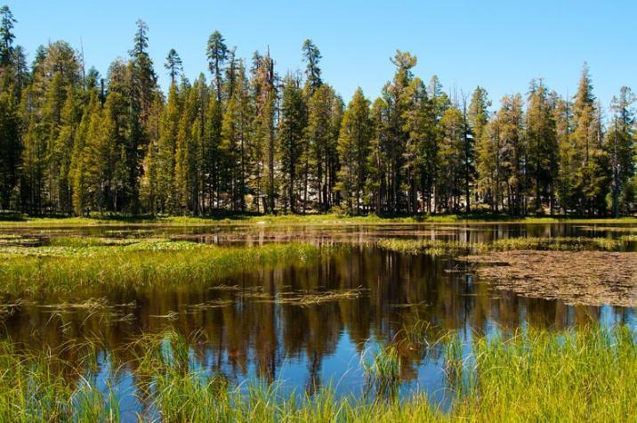 Yosemite. Un laghetto