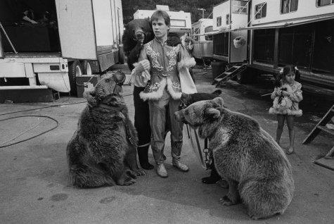 Bears at Circus Vargas in California in 1990. Jill Freedman
